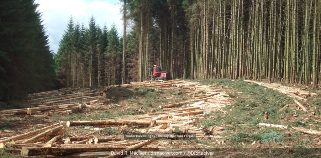 Slide of timber-producing forest